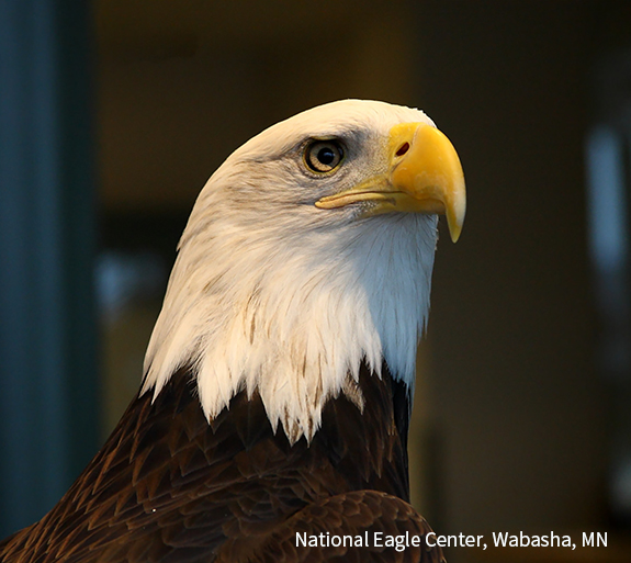 Wabasha - National Eagle Center